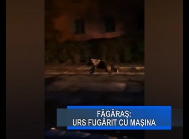 Stirile Nova TV Fagaras, 7 octombrie 2019