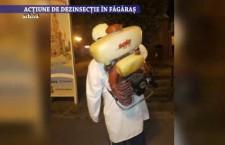 Actiune de dezinsectie in Fagaras – 23 iunie 2021