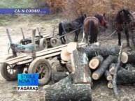 Stirile Nova TV Fagaras, 27 noiembrie 2015