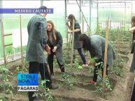 Stirile Nova TV Fagaras, 26 mai 2016