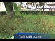 Stirile Nova TV Fagaras, 18 iulie 2016