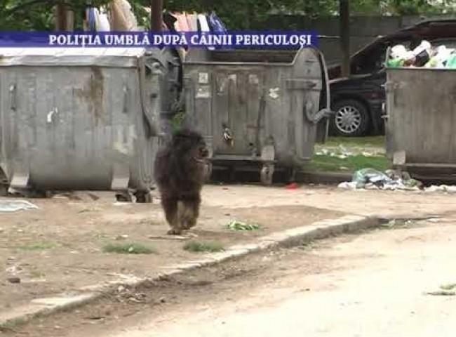 Politia umbla dupa cainii periculosi – 14 iuni 2021